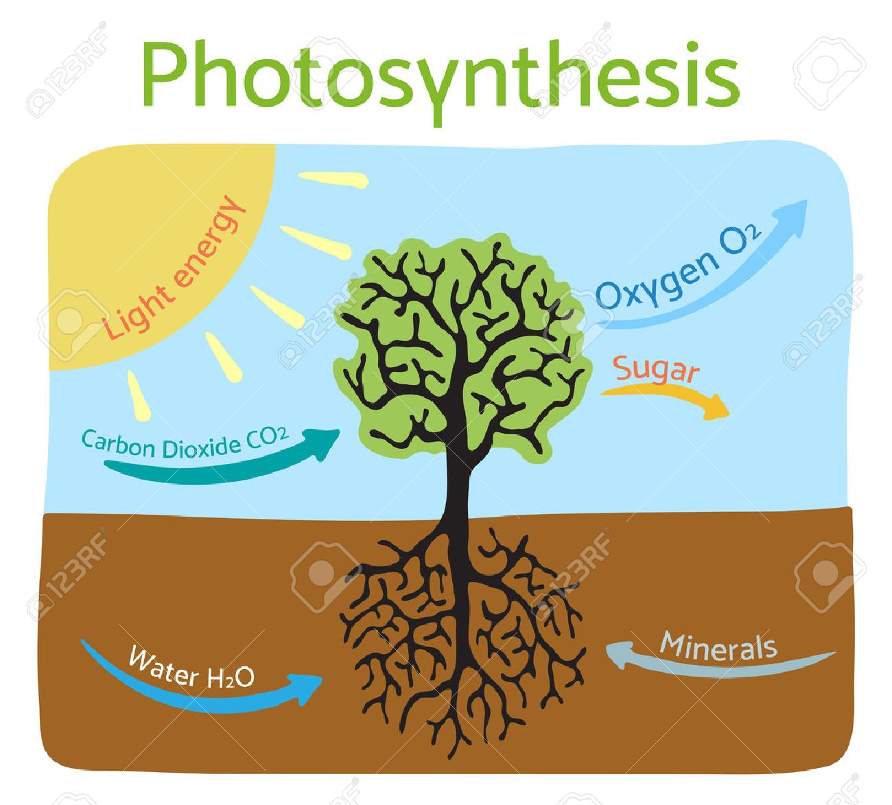 Photosynthesis diagram schematic illustration of the photosynthesis diagram schematic illustration of the photosynthesis process stock vector 56913780 pooptronica Image collections