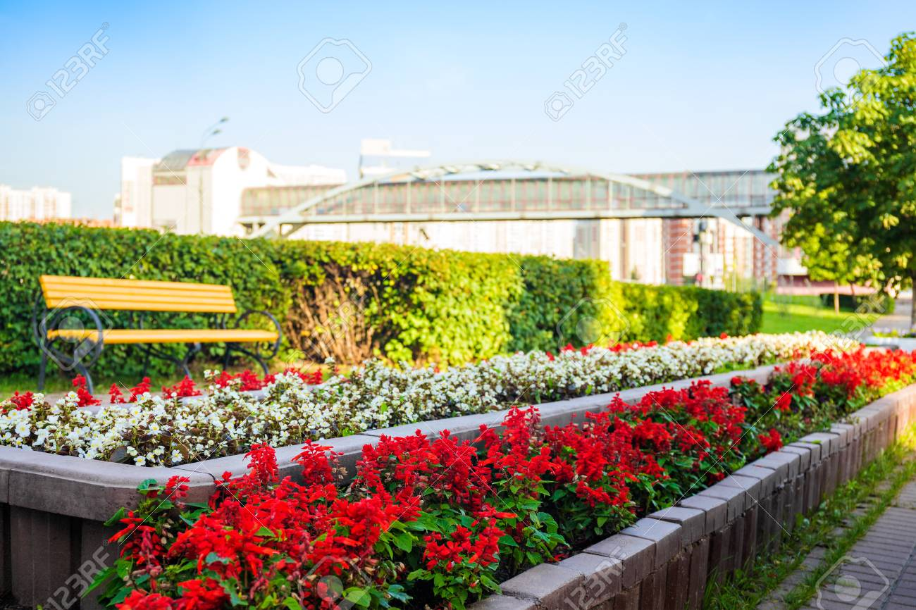 Red and white flowers in the city flower bed stock photo picture red and white flowers in the city flower bed stock photo 66760193 mightylinksfo