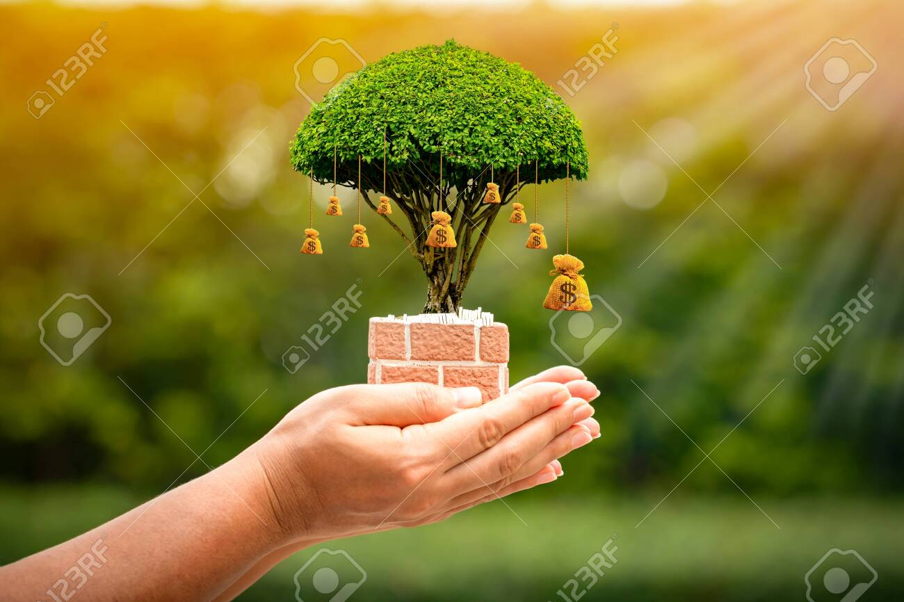 Woman hand hold the money bag of tree with growing on sunlight in the public park, Saving for business investment and give a loan concept. - 153494118