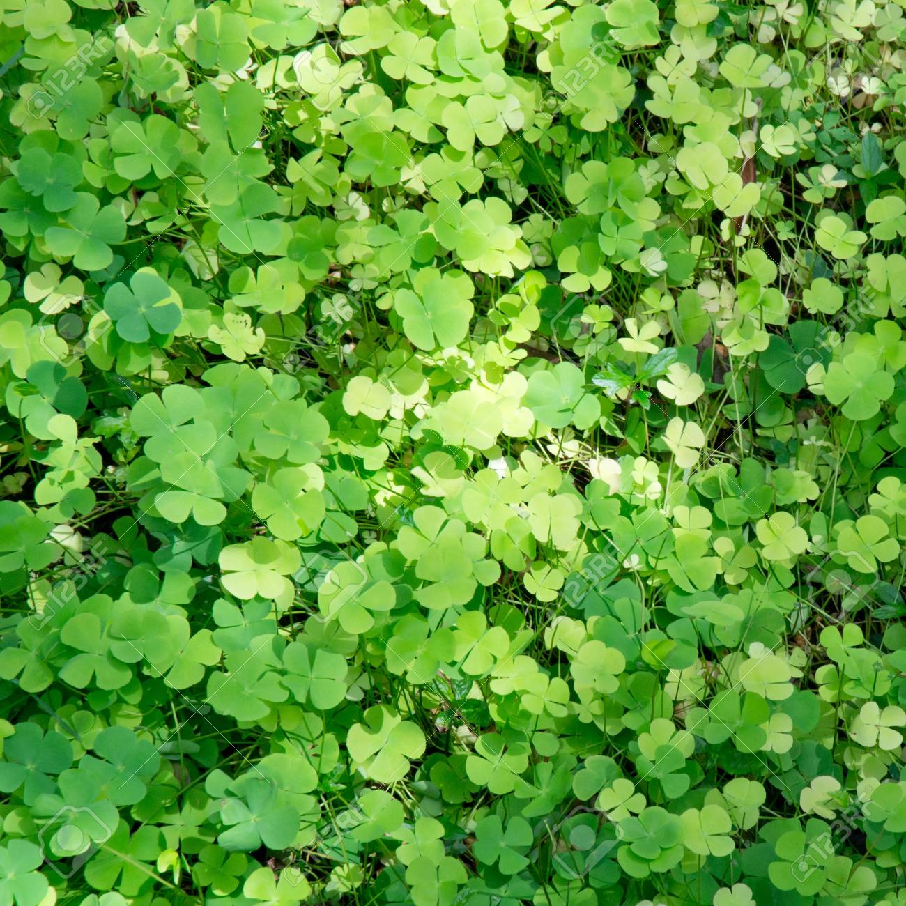 green leaf background Stock Photo - 14061221