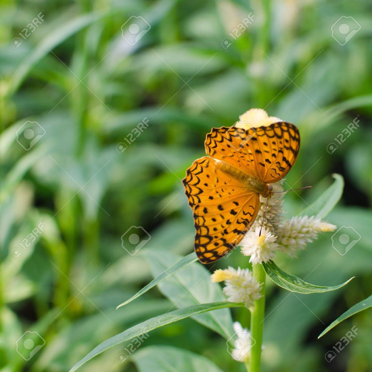 Schmetterling Futterung Auf Blumen Lizenzfreie Fotos Bilder Und