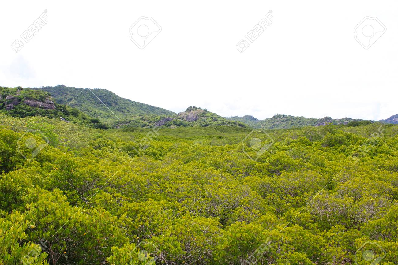 top view of the forest Stock Photo - 22496601