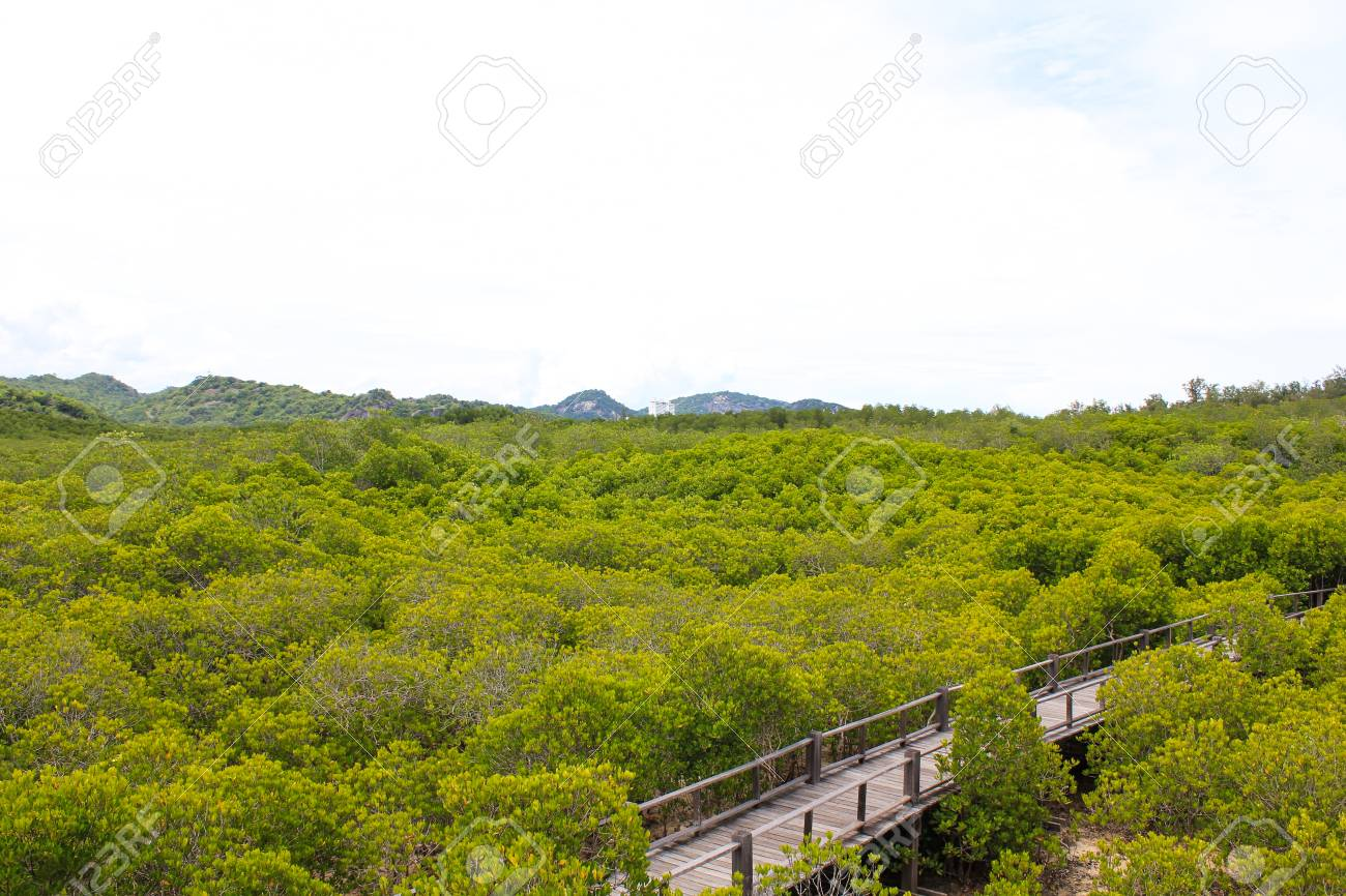 top view of the forest mangrove Stock Photo - 22496603
