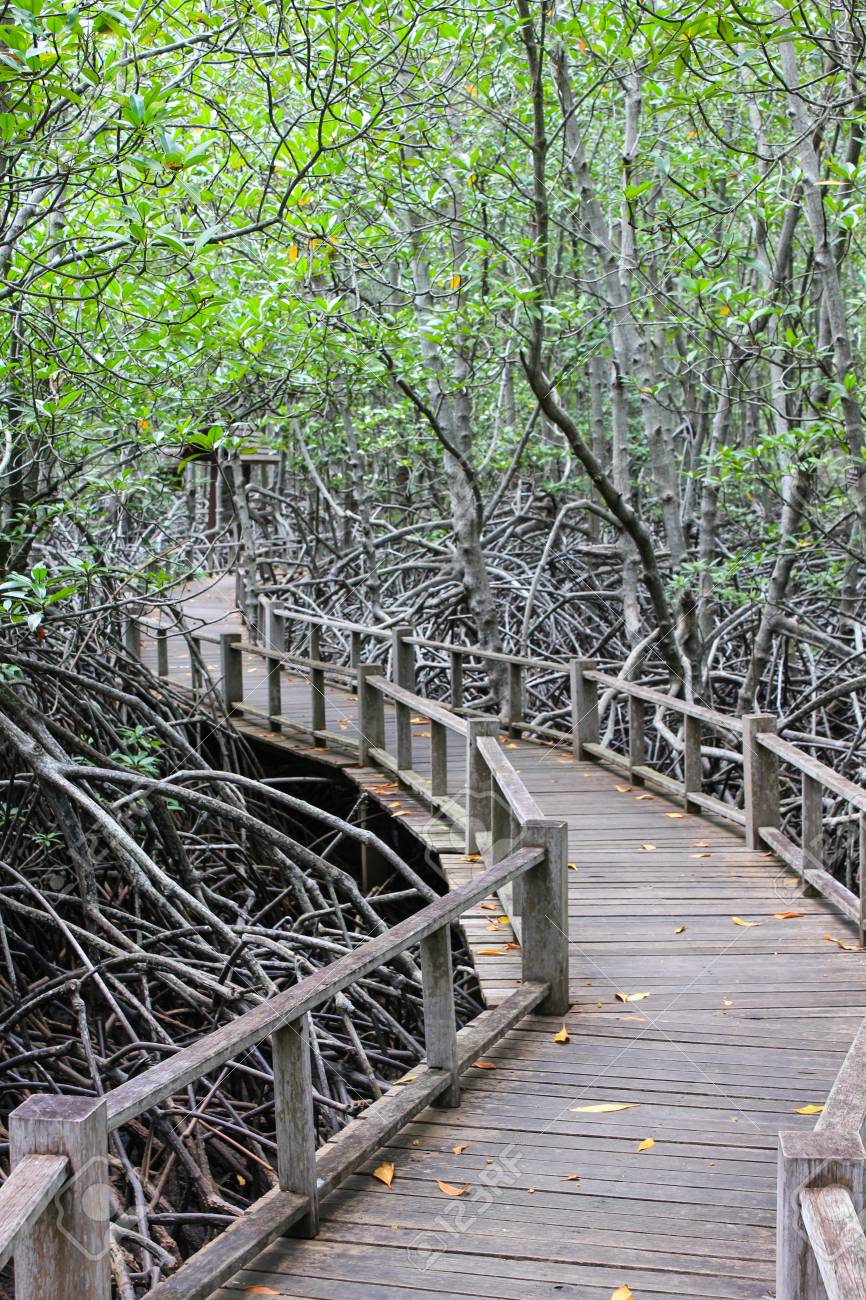 the road in the Mangrove Forest Stock Photo - 22496611