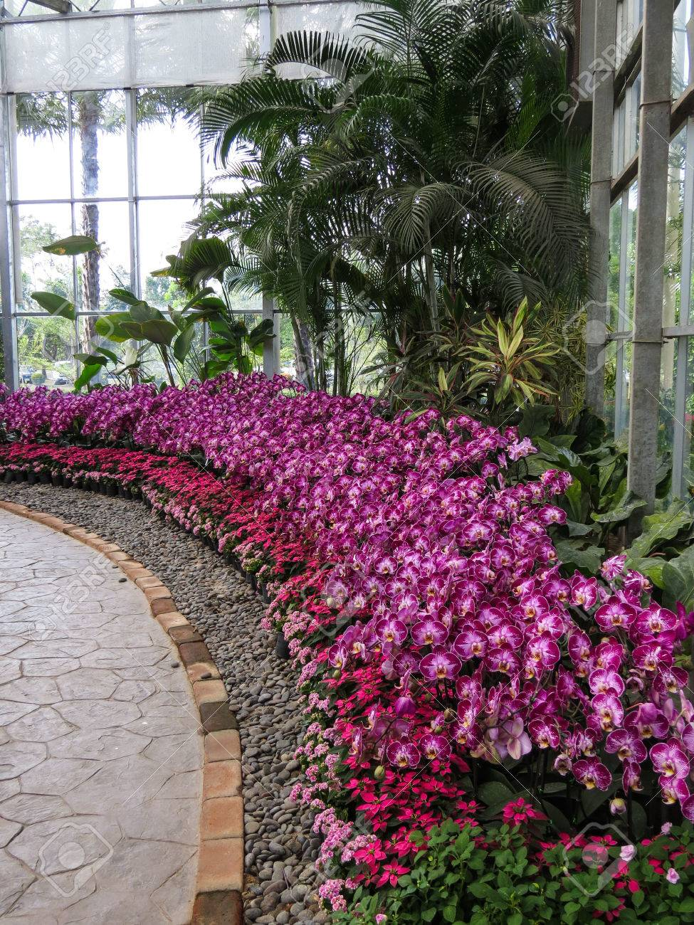 Pattern Of Pink And Violet Orchid Plant With Pink Poinsettia Stock Photo Picture And Royalty Free Image Image 28399353