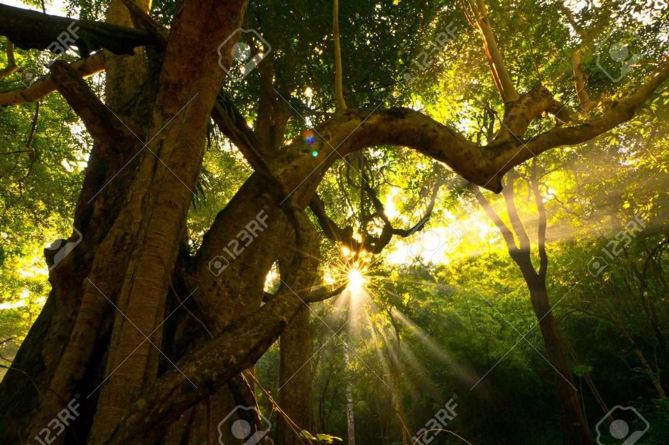 Nature, Sunlight, Sky, sun exposure, Sam Light, light, sunshine, beautiful skies, clouds, fog, low up, when noon sun, light, light sun, background, spiritual, sunray, blue, cloud, heaven, heavenly, heavens, Twilight. Stock Photo - 8756417