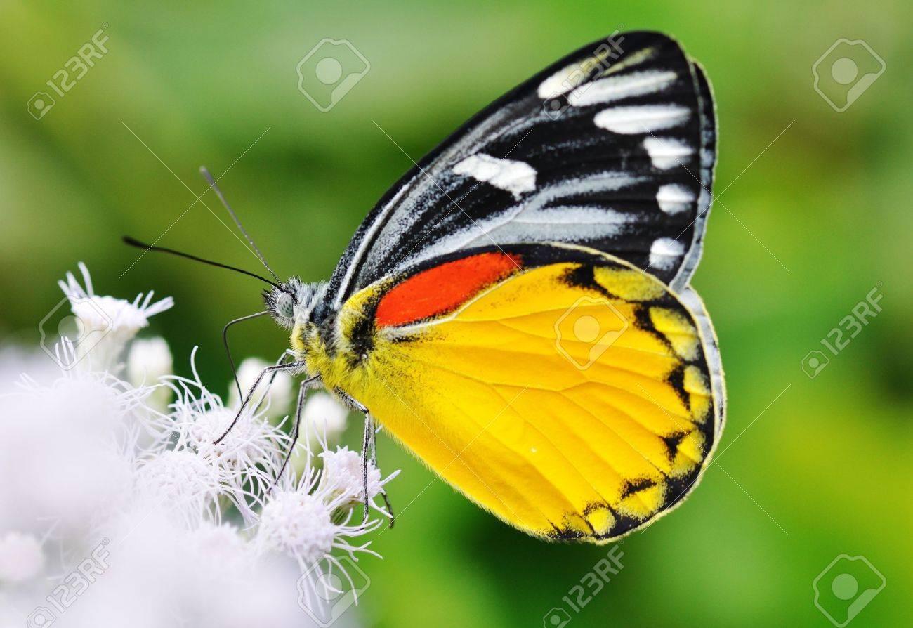 Schmetterling Fing Am Morgen Auf Die Blumen Im Garten. Lizenzfreie ... Blumen Schmetterlinge Im Garten