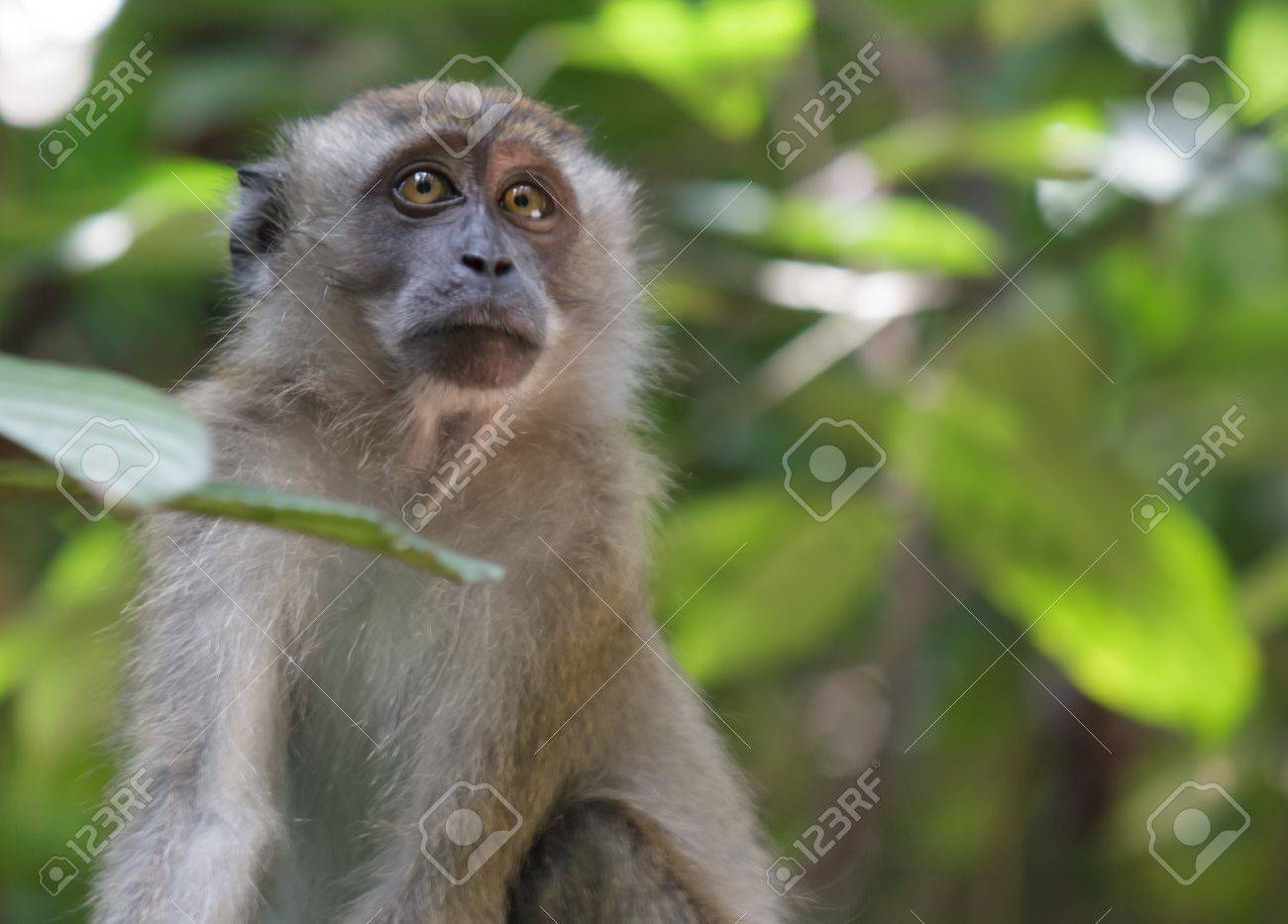 Monkey in the jungle Stock Photo - 16214738