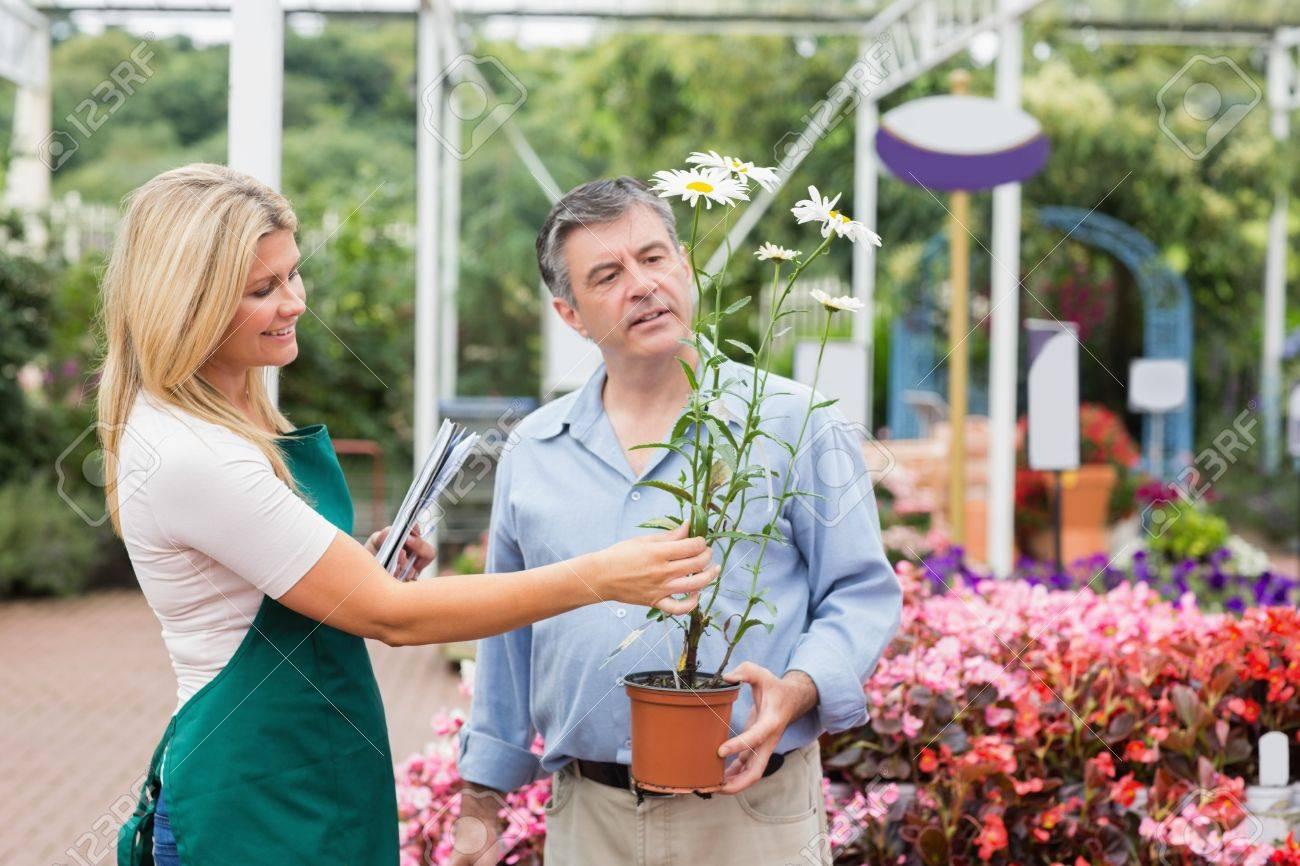 Florist helping the customer while deciding on daisy plant Stock Photo - 16067532