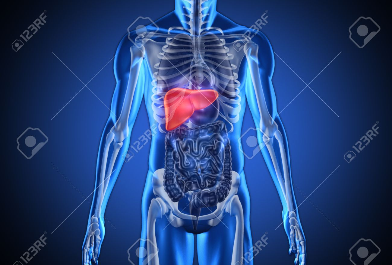 digital blue human with highlighted liver on dark blue background