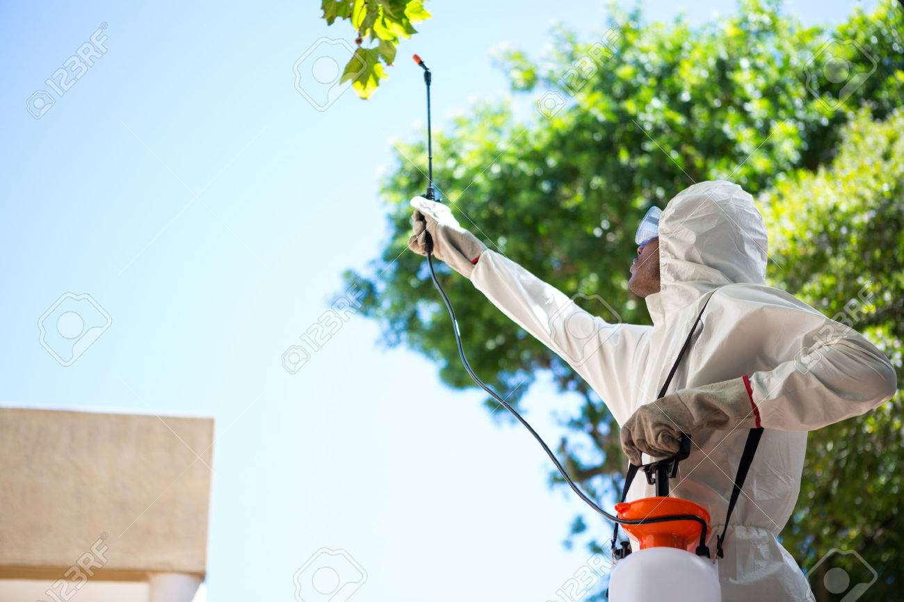 Man Doing Pest Control In The Backyard Stock Photo   54925416