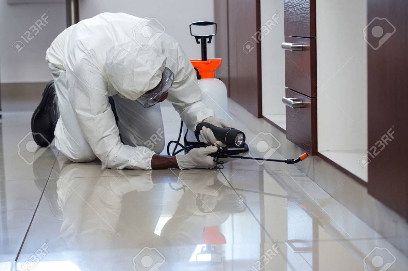 Pest control man spraying pesticide under the cabinet in kitchen Stock Photo - 54927153