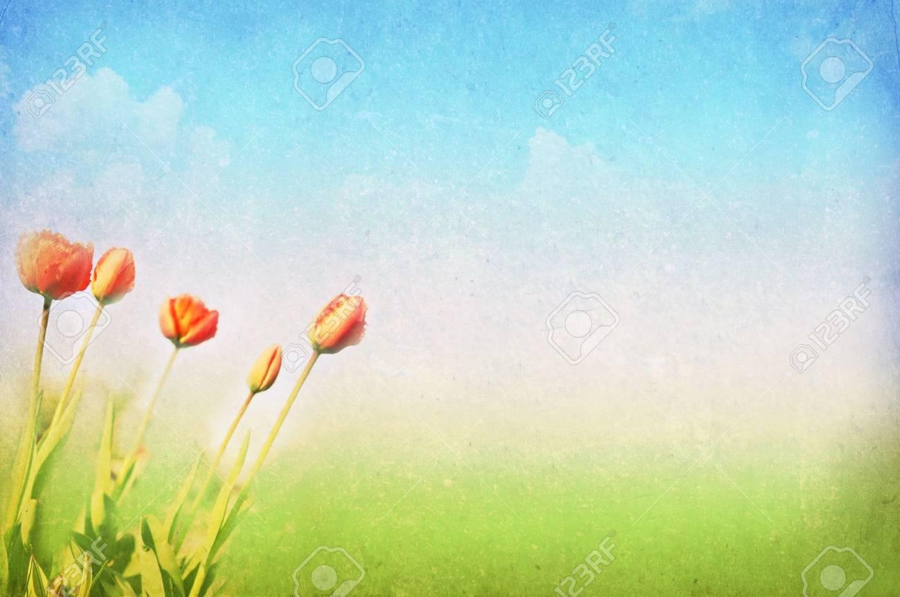 vintage spring/summer background Stock Photo - 12285122
