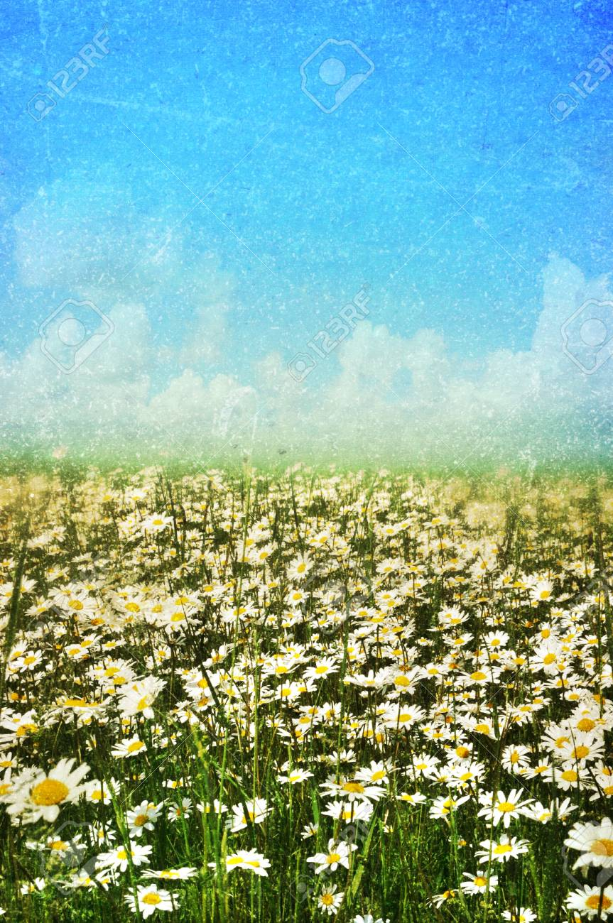 vintage spring summer background Stock Photo - 12674474