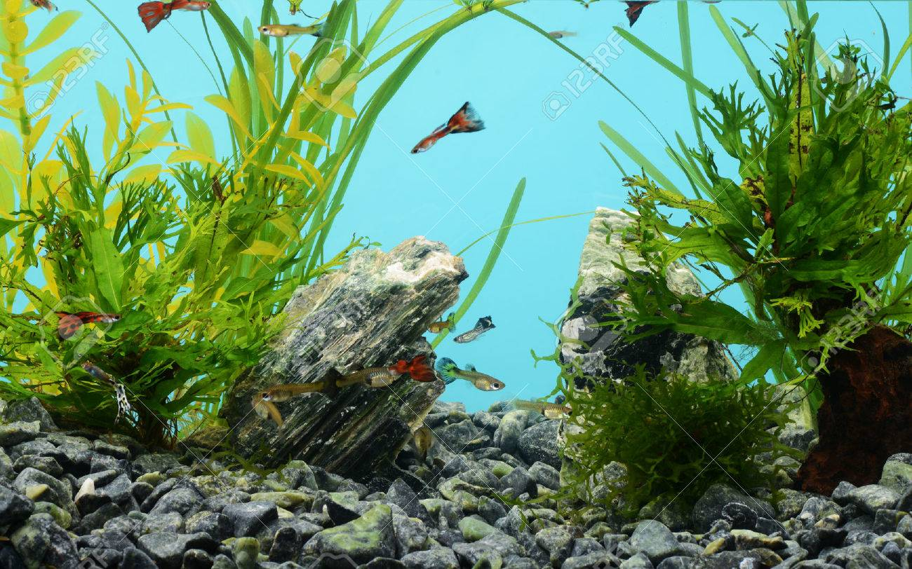 Tropical freshwater aquarium with fishes - 39542720