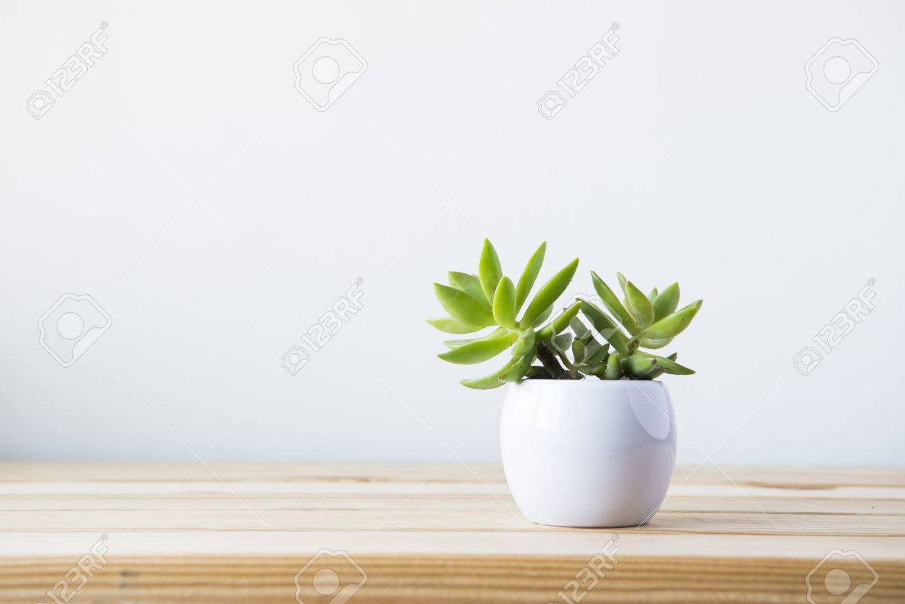 Indoor plant on wooden table and white wall Banque d'images - 53276461