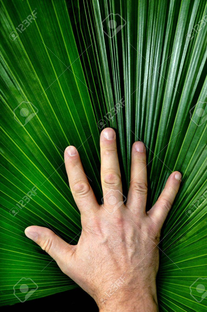 Vertical image of a man's hand resting on a palmate pond frond. Stock Photo - 15631318