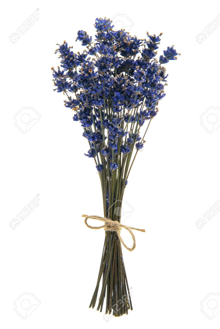Bouquet of dried lavender flowers tied with a burlap twine on a white background - 166765728