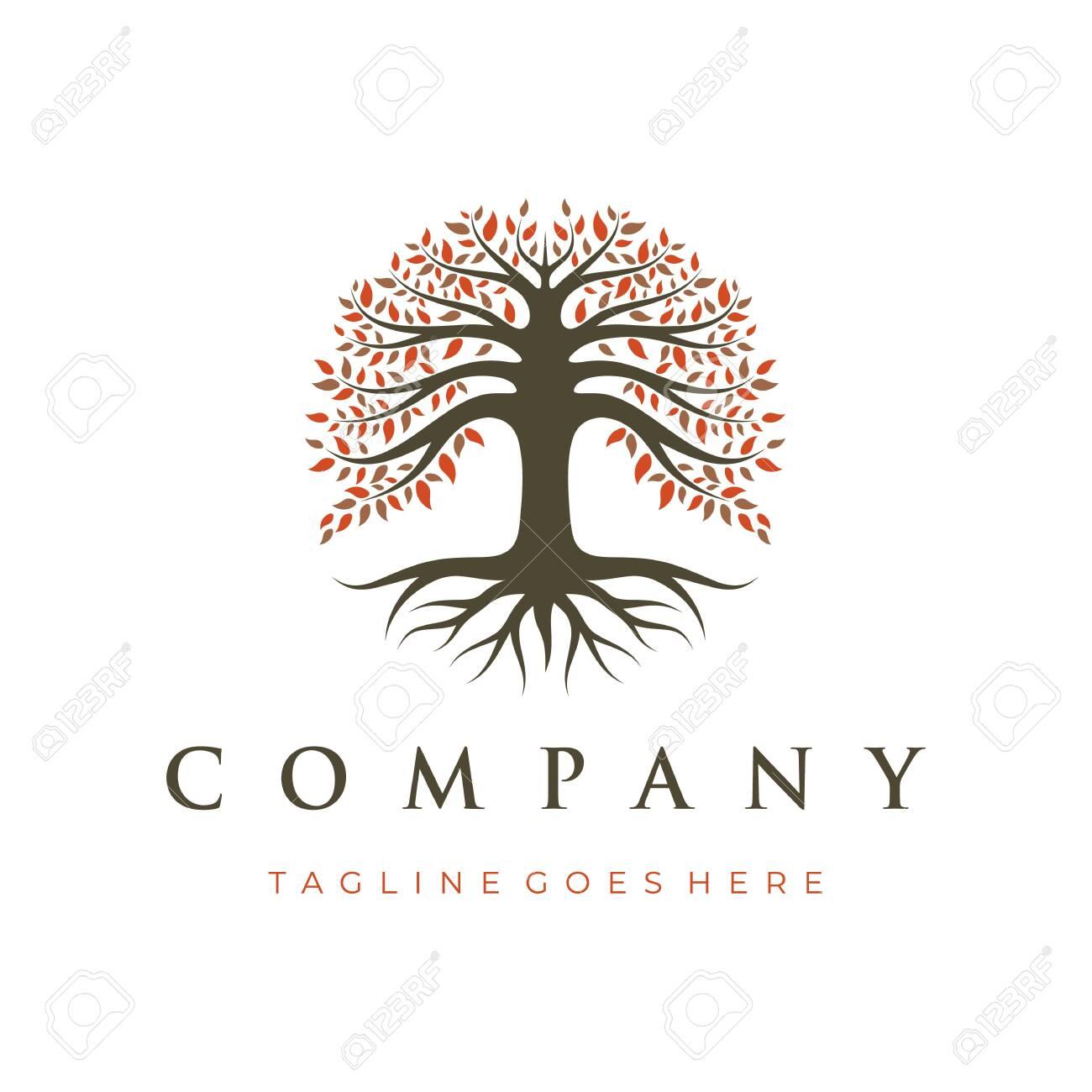 Tree Of Life Oak Banyan Tree Logo Design Template Royalty Free Cliparts Vectors And Stock Illustration Image 150110861