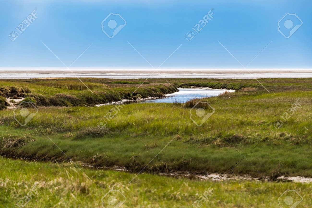 Salt marshes on the coast of Sankt Peter-Ording - 171101107