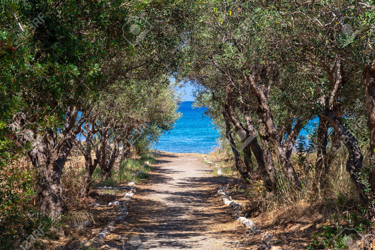 Olive trees in front of the blue sea - 171854991
