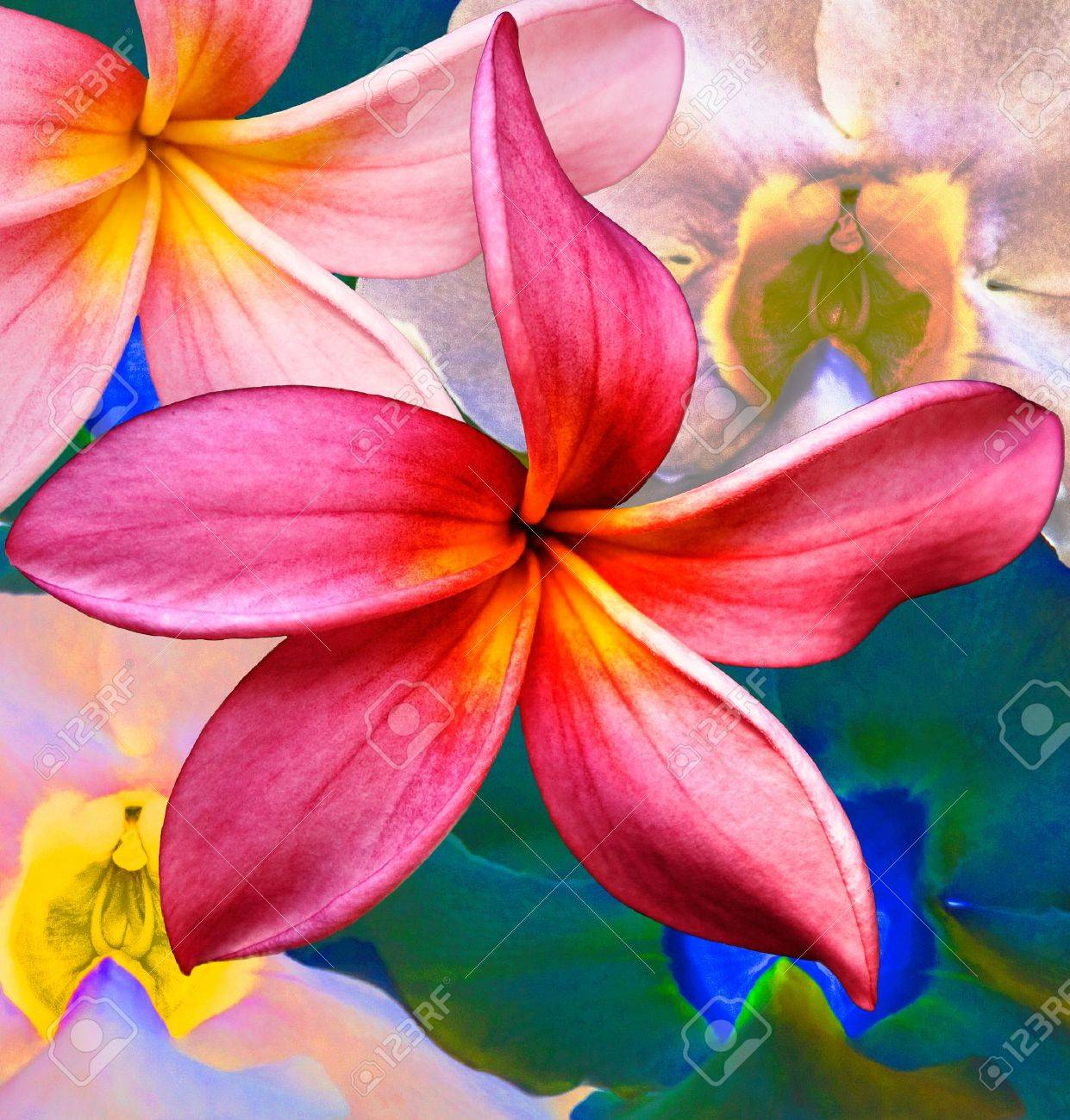 A collage of tropical flowers in a colorful spread Stock Photo - 5332245