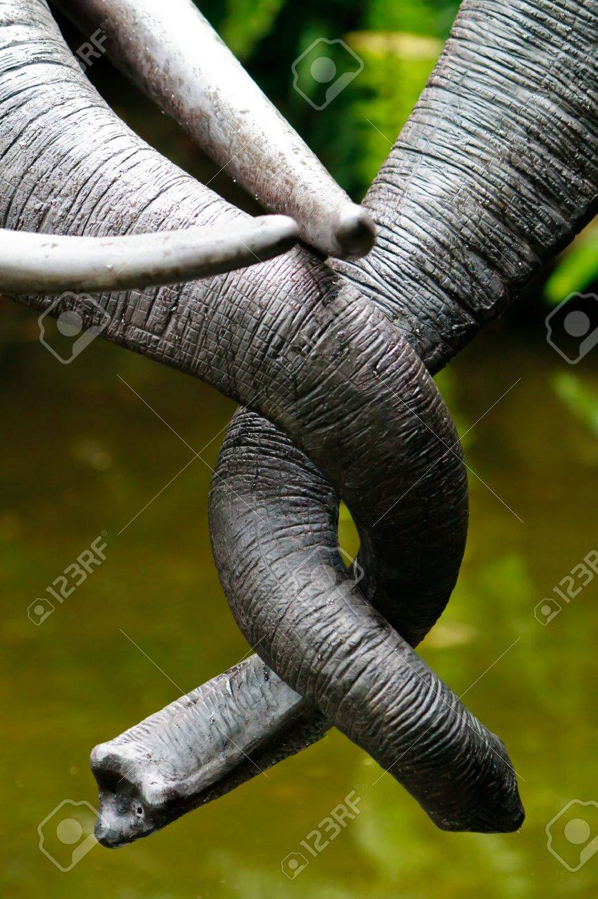 A pair of elephant trunks about to engage in an embrace Stock Photo - 10025231