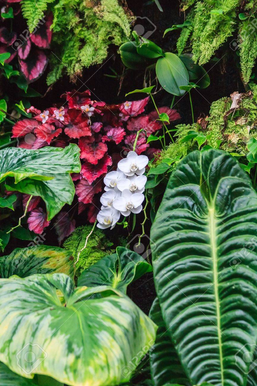 A strand of wild white orchids nestled between heavy leaves and plants Stock Photo - 20275228
