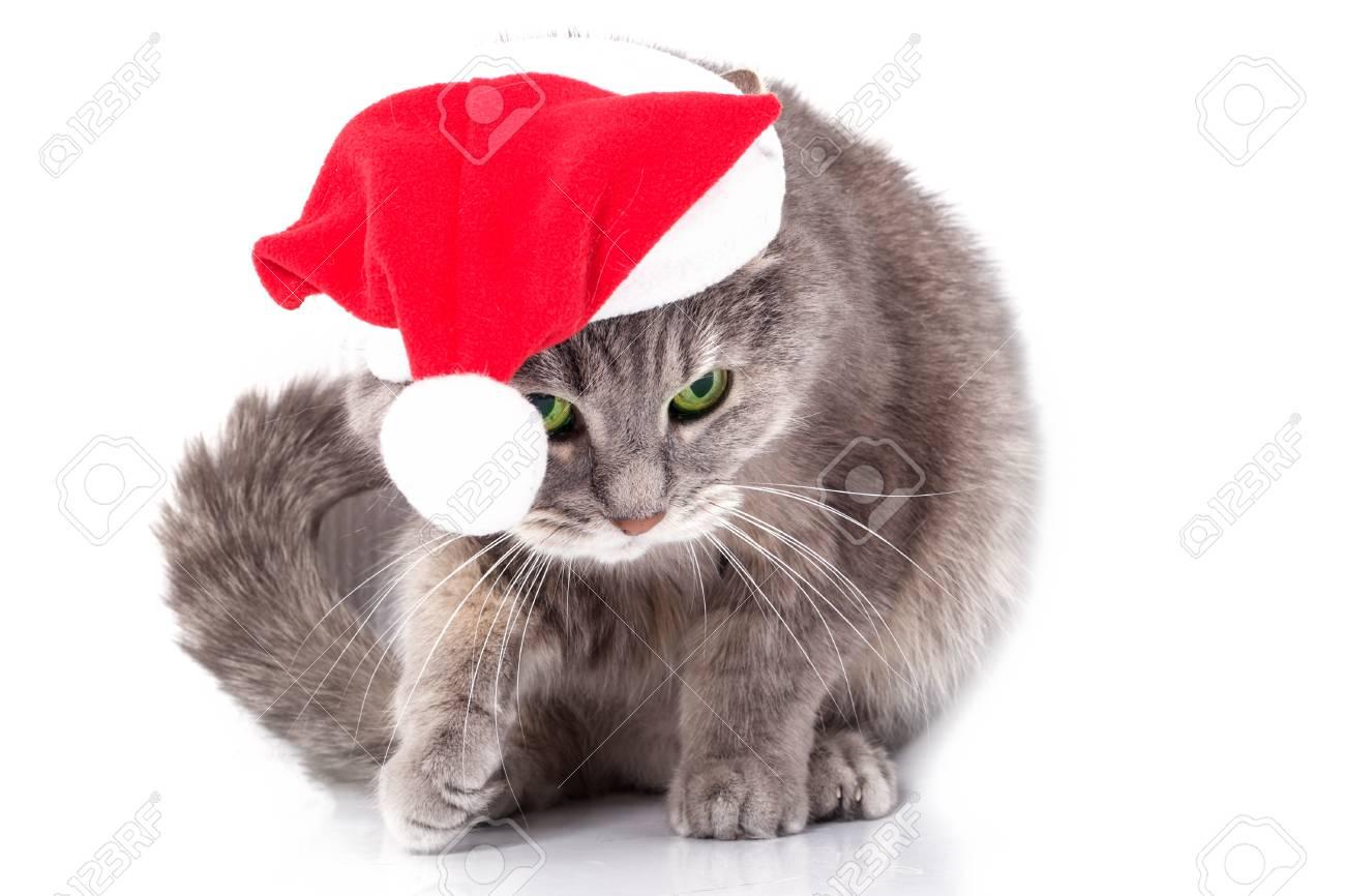 Immagini Stock Gatto Nel Cappello Di Babbo Natale Il Gatto Grigio