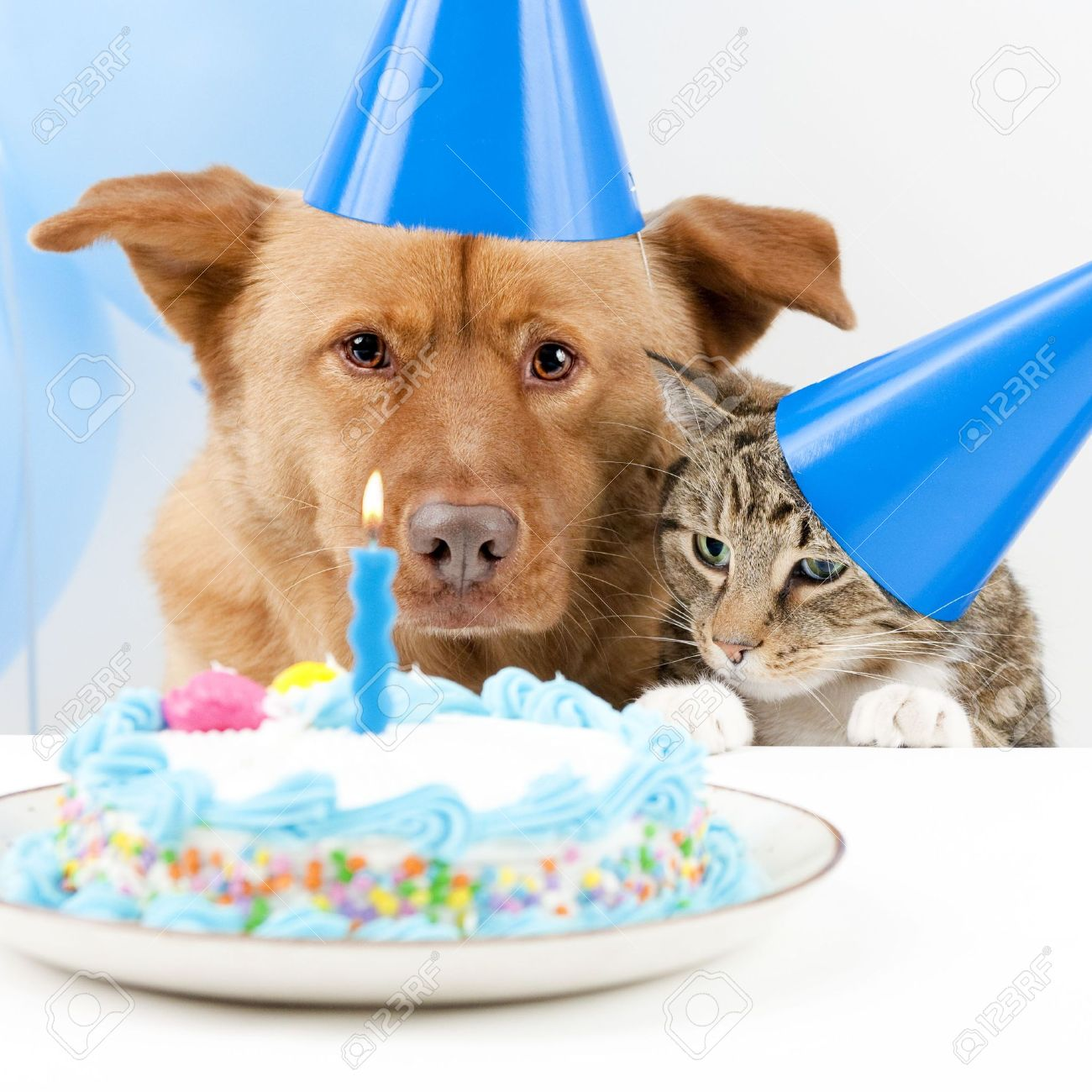 dog and cat birthday party with cake stock photo picture and