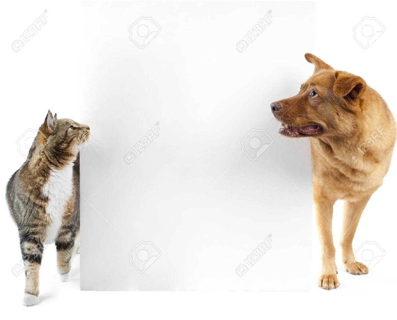 Cat And Dog Side To Side And Looking At Banner Stock Photo Picture And Royalty Free Image Image 7597258