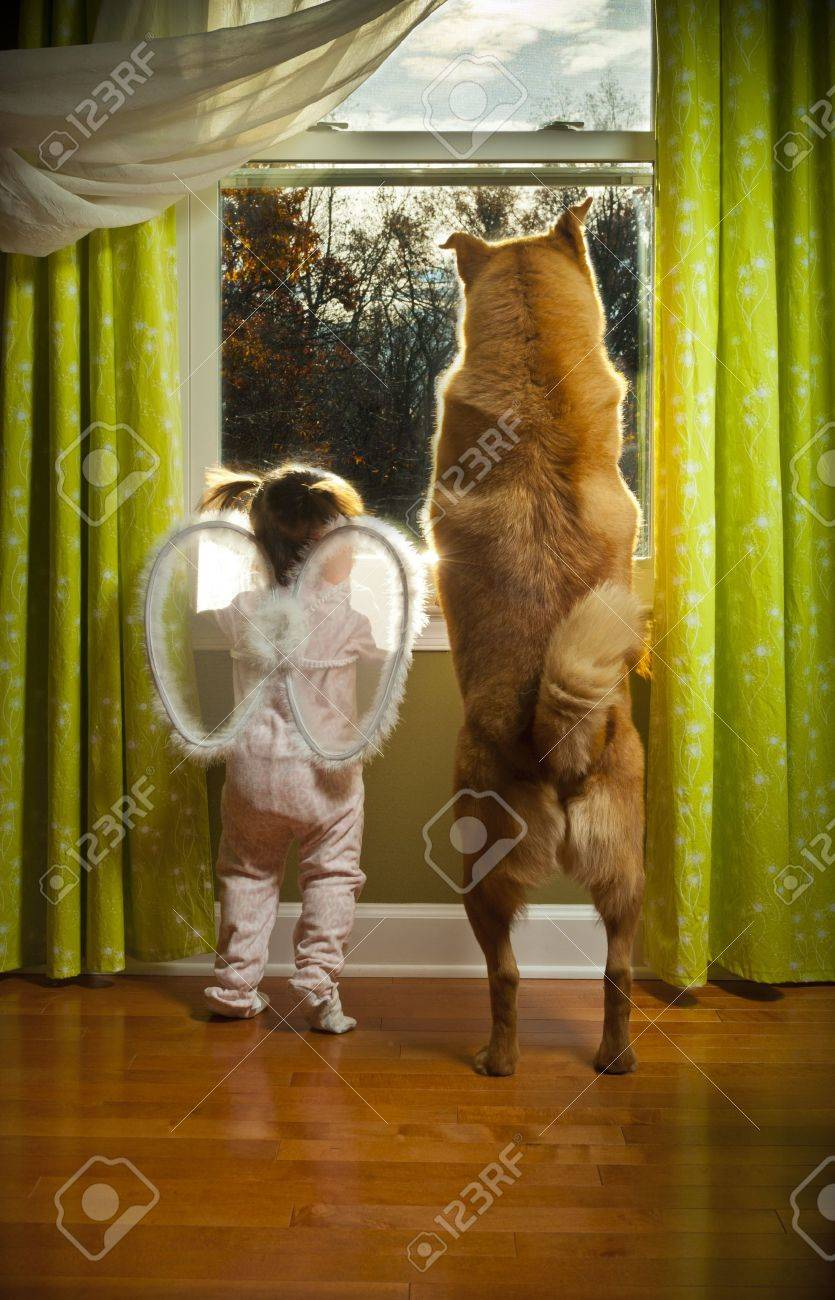 Baby girl and dog watching outside the window Stock Photo - 11327032