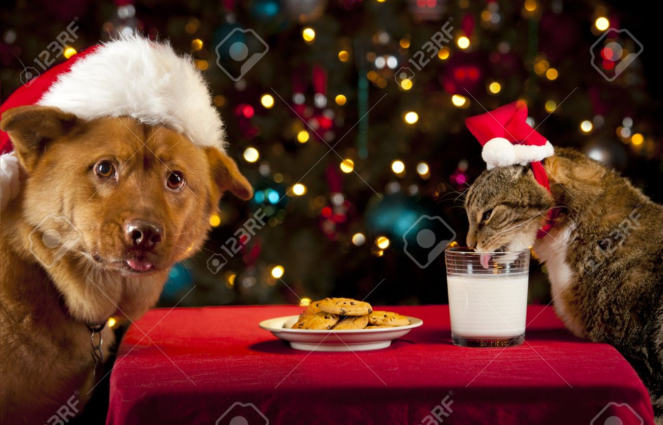 Cat And Dog Eating And Drinking Santa Stock Photo Picture And Royalty Free Image Image 12669244