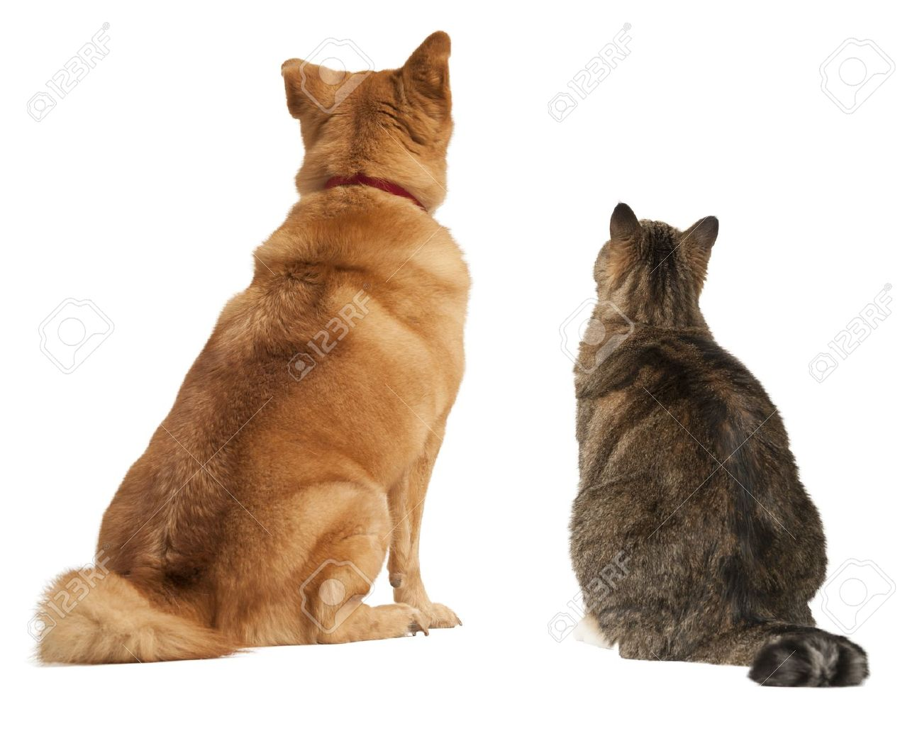 Cat and dog looking up. Add your text above. Stock Photo - 16294776
