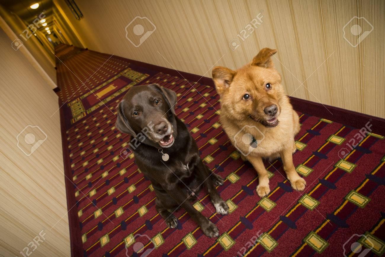 Dogs in pet friendly hotel - 54922349
