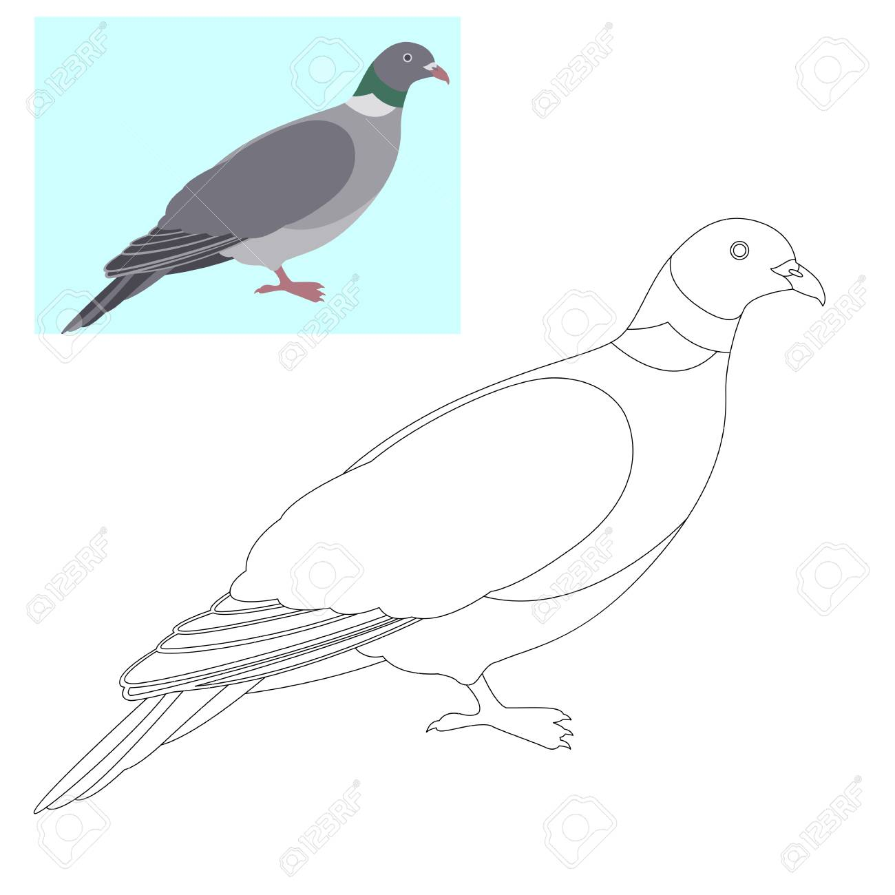 Pigeon Dove Vector Illustration Coloring Page Outline Royalty Free ...