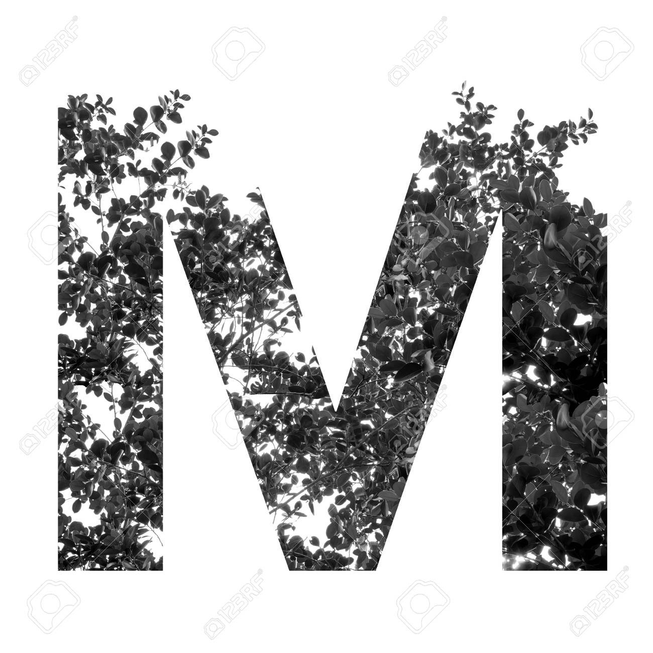 ec5c073719a5 Foto de archivo - Letra M doble exposición con las hojas en blanco y negro  aislado en el fondo blanco