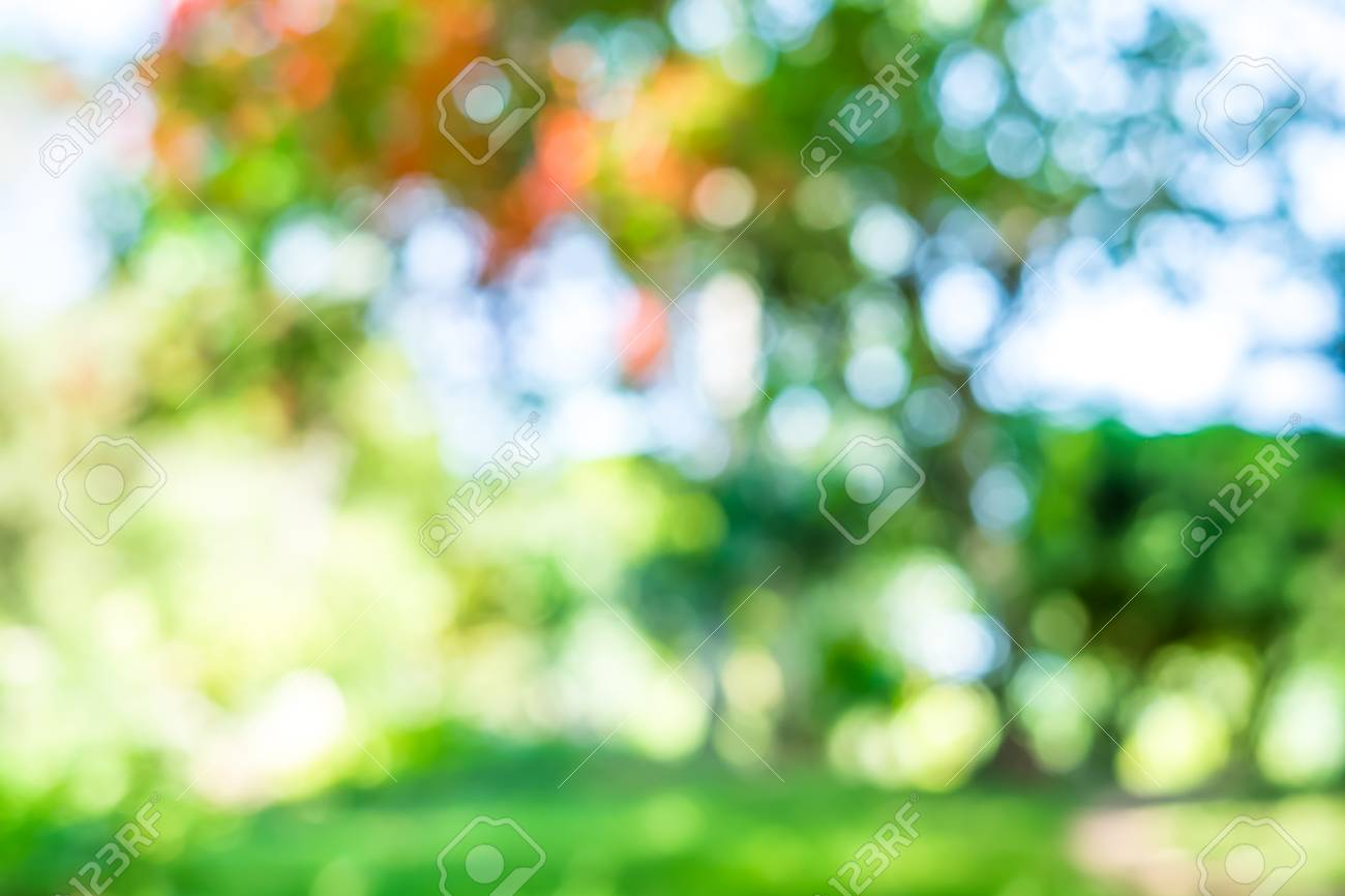 Blur Background Outdoor Park With Tree And Bokeh Light