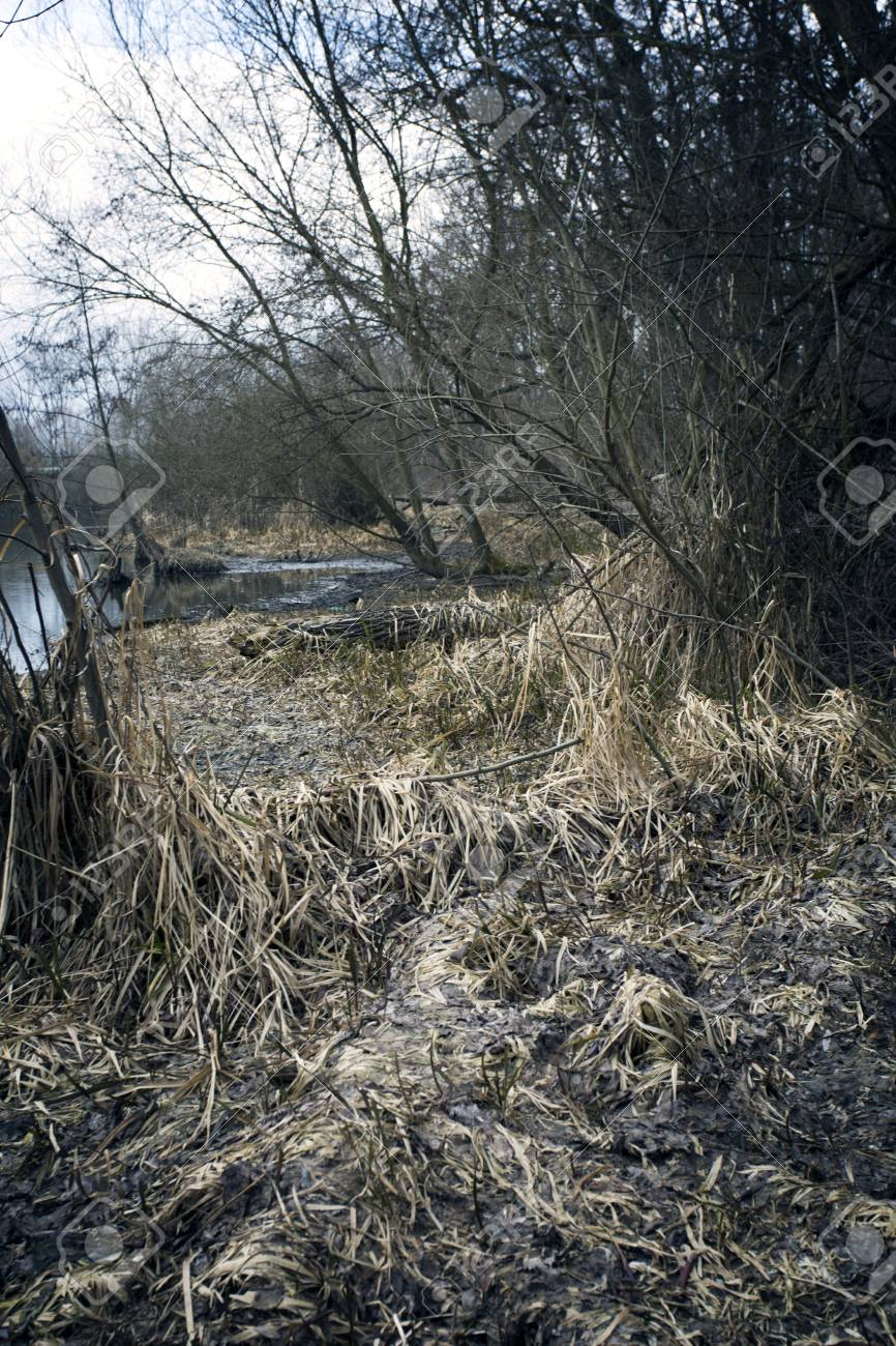 Swamps In Autumn Cool Dark Lake In Primeval Forest Cold Melancholic Landscape With Water Vapor