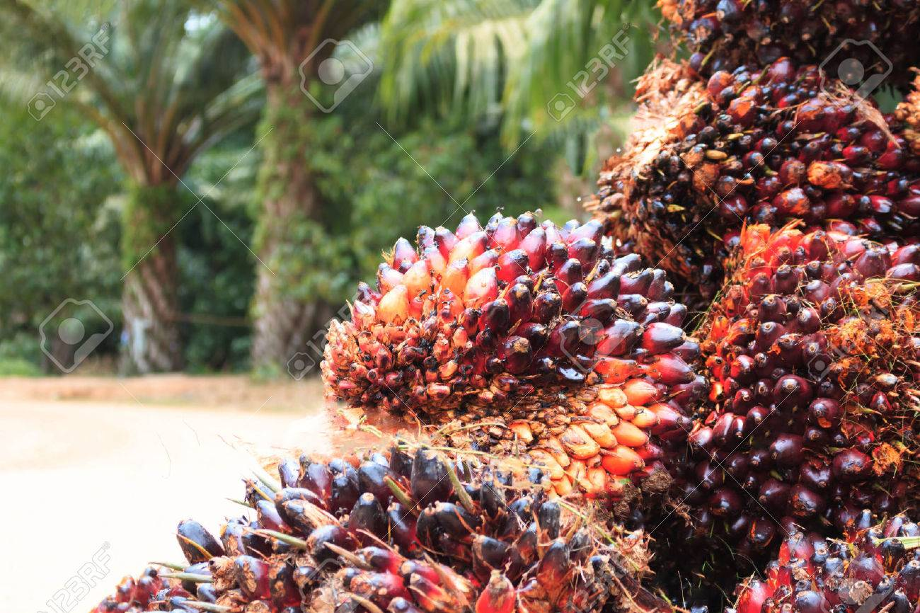 Palm oil seed - 38794084