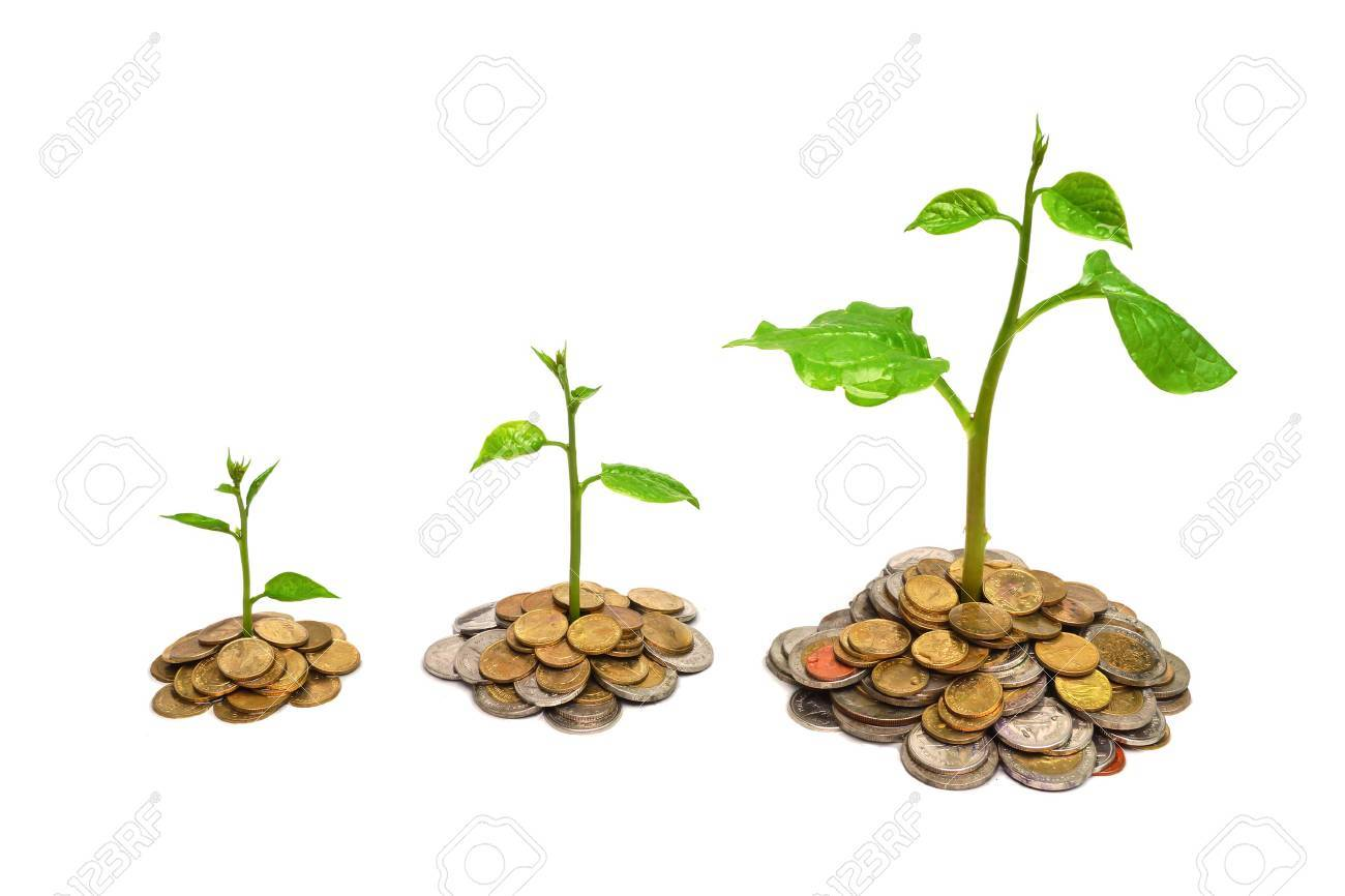 trees growing on coins   csr   sustainable development Stock Photo - 24713518