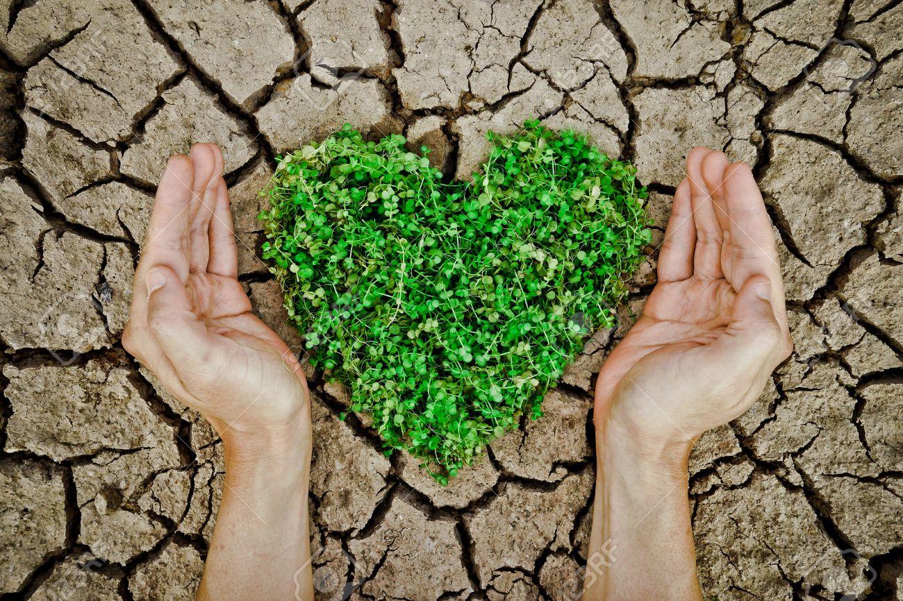 Картинки с изображением сердца в природе