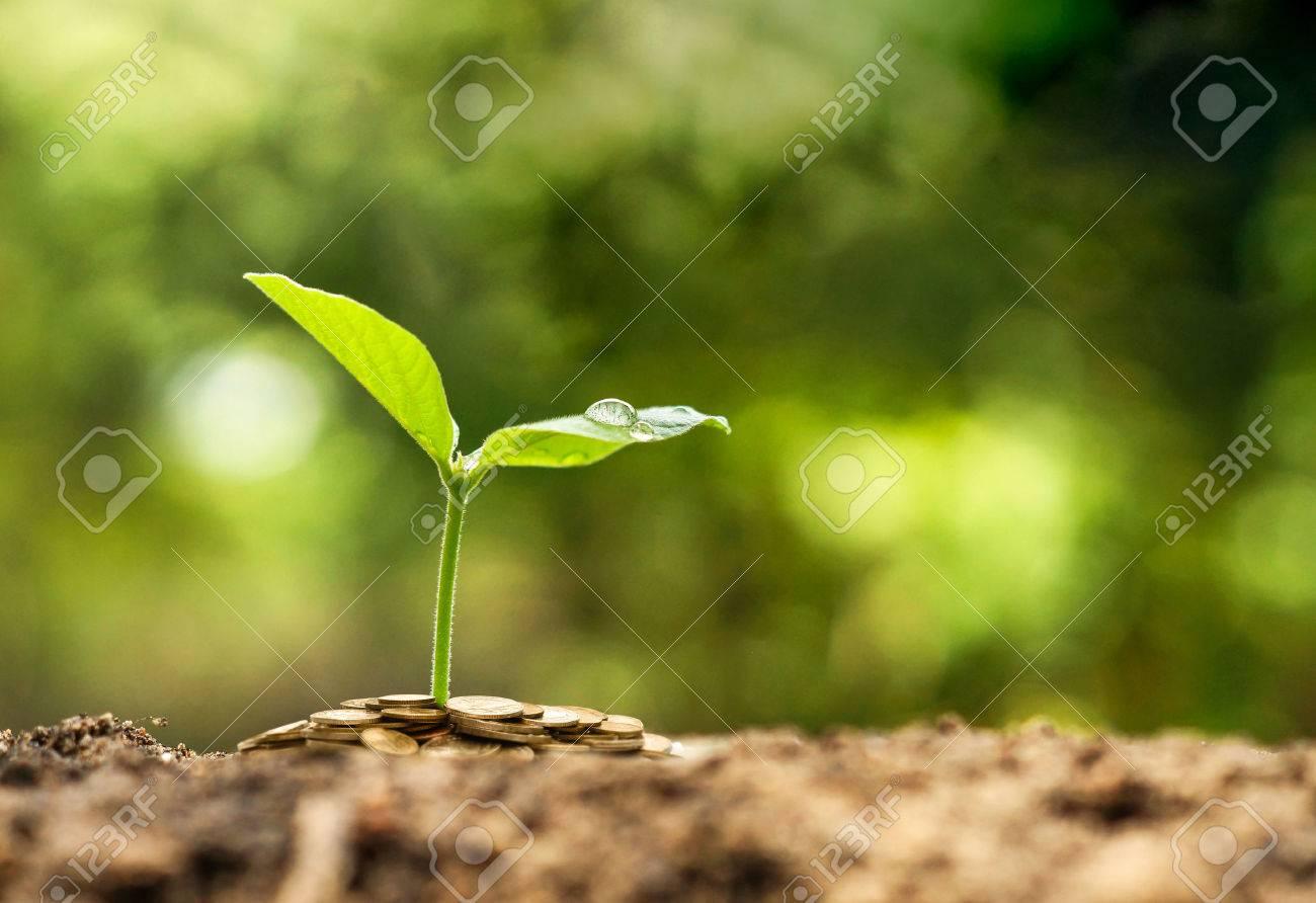 Green business - 50706464