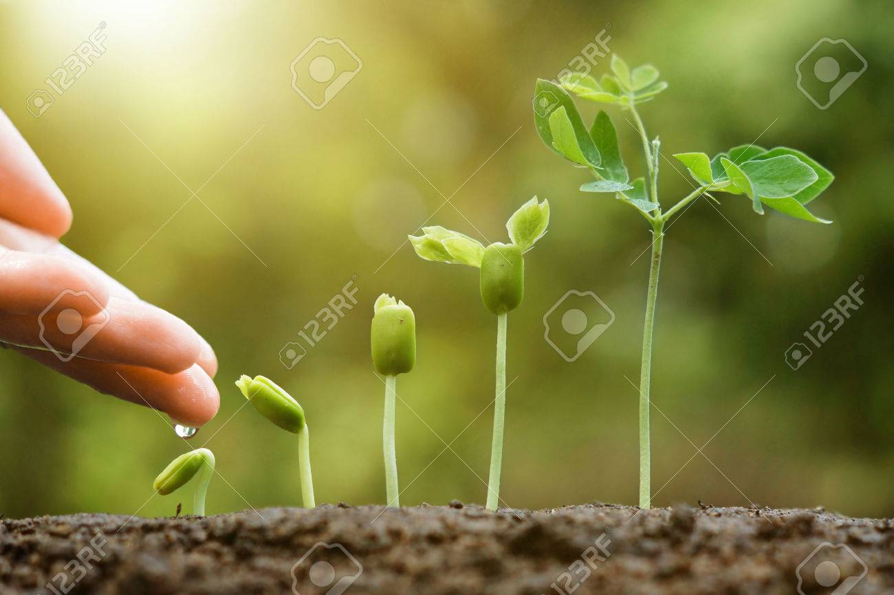 hand nurturing and watering young baby plants growing in germination sequence on fertile soil with natural green background - 51059341