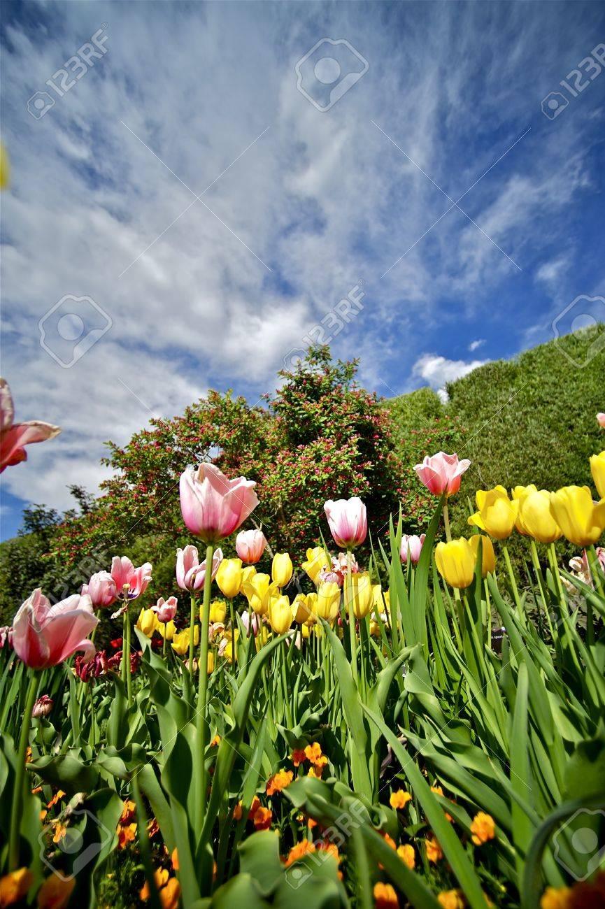 Summer Tulips Garden Vertical Photo Beautiful Summer Day In Stock