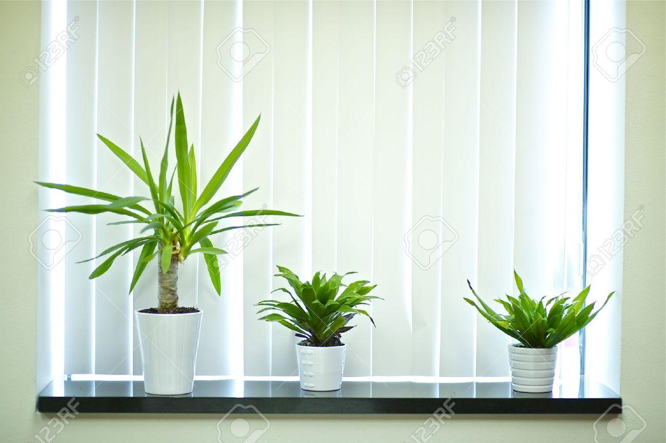Plants For Window Decoration. Office Window Stock Photo   13239084