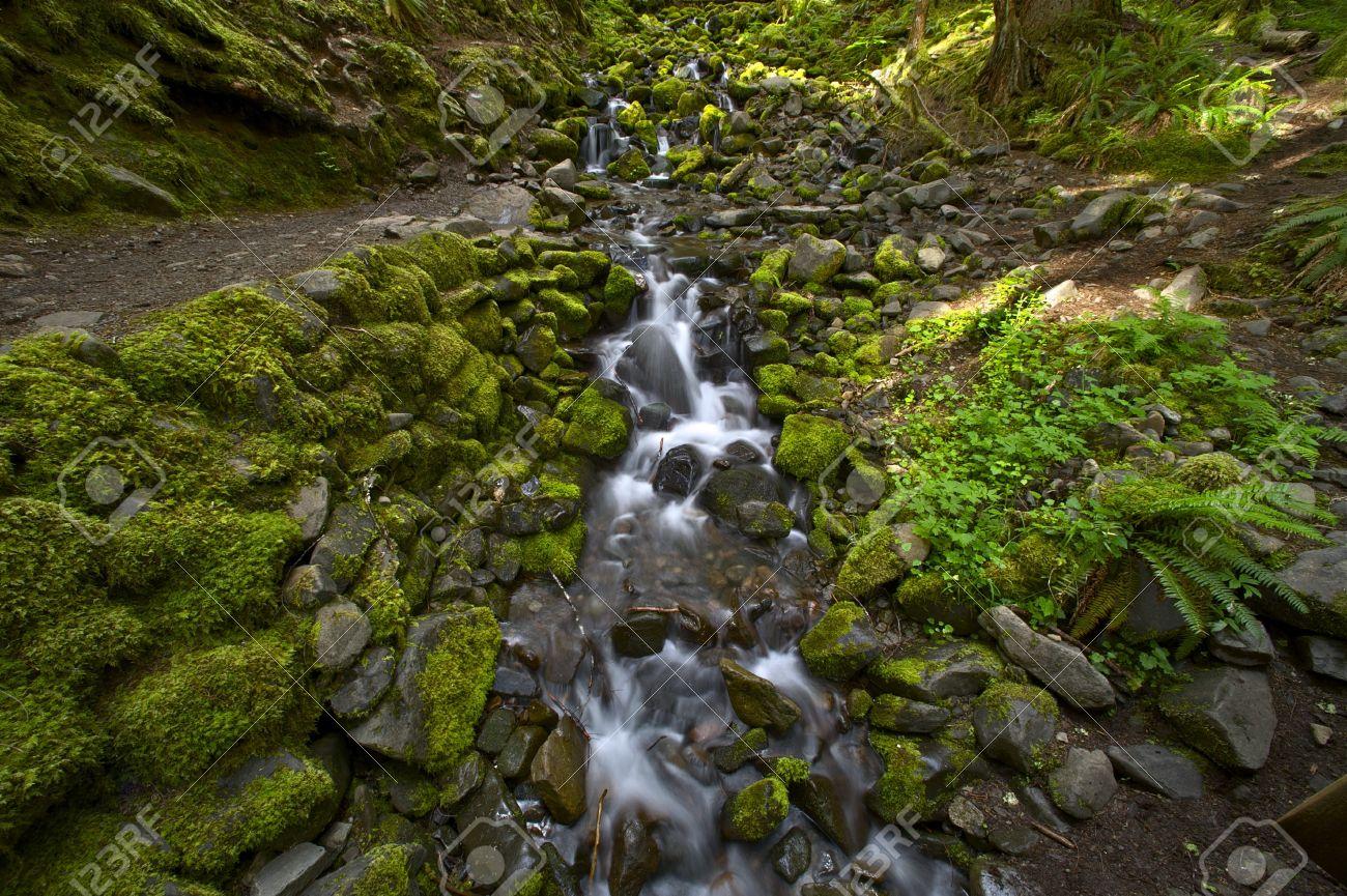 Washington State Rainforest Landscape. Mossy Rocky Creek. Nature Photo  Collection - Hoh Rainforest Creek. Washington State Rainforest Landscape... Stock