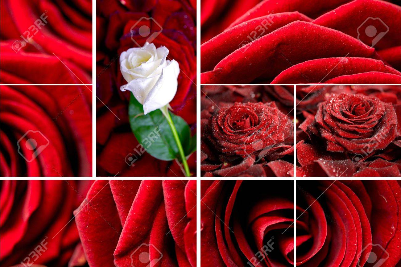 lovely roses mosaic. red roses and roses petals composition stock