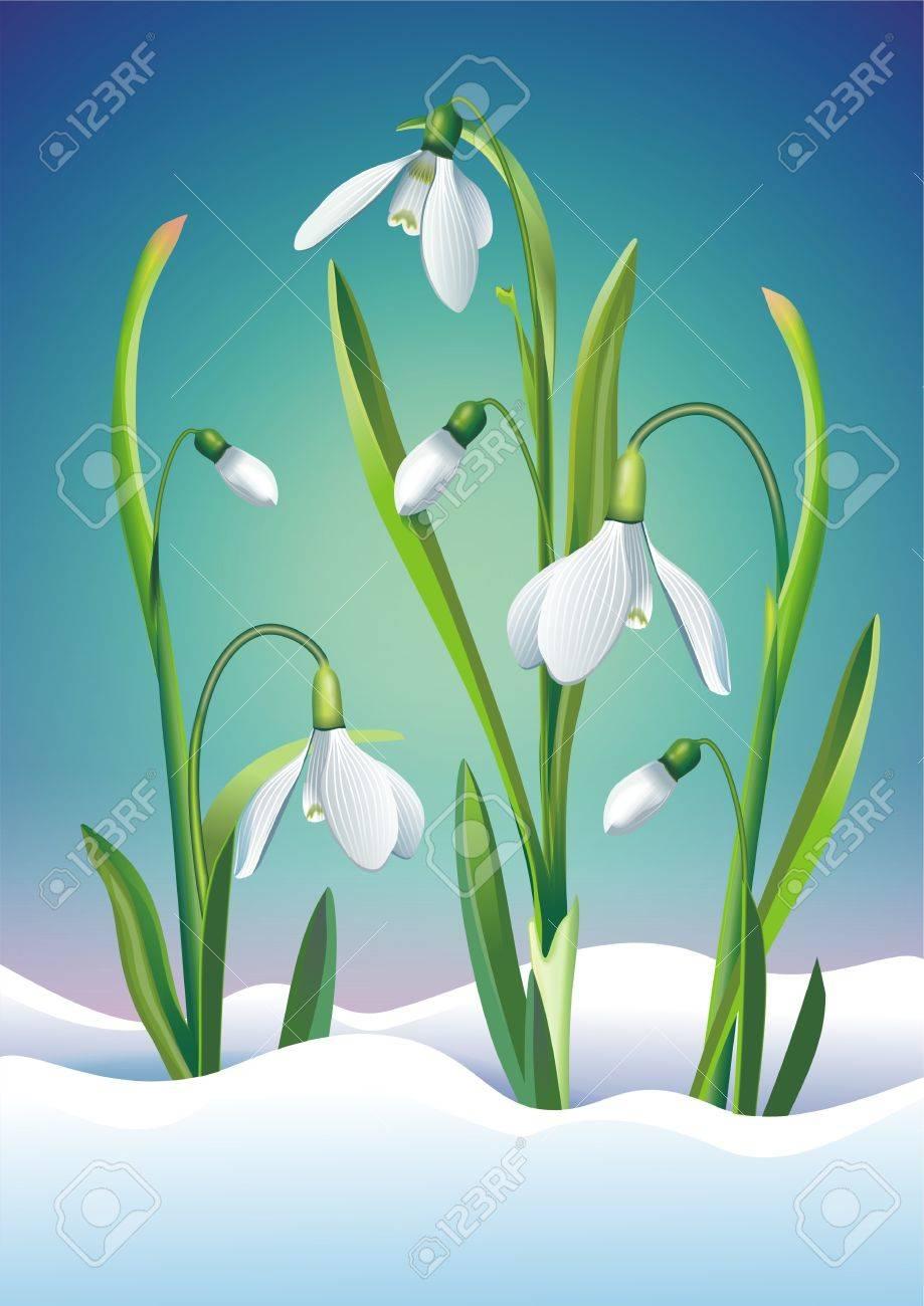 Snowdrop Blumen Kunst Illustration Fruhlings Blumen Lizenzfreie Fotos Bilder Und Stock Fotografie Image 37851620