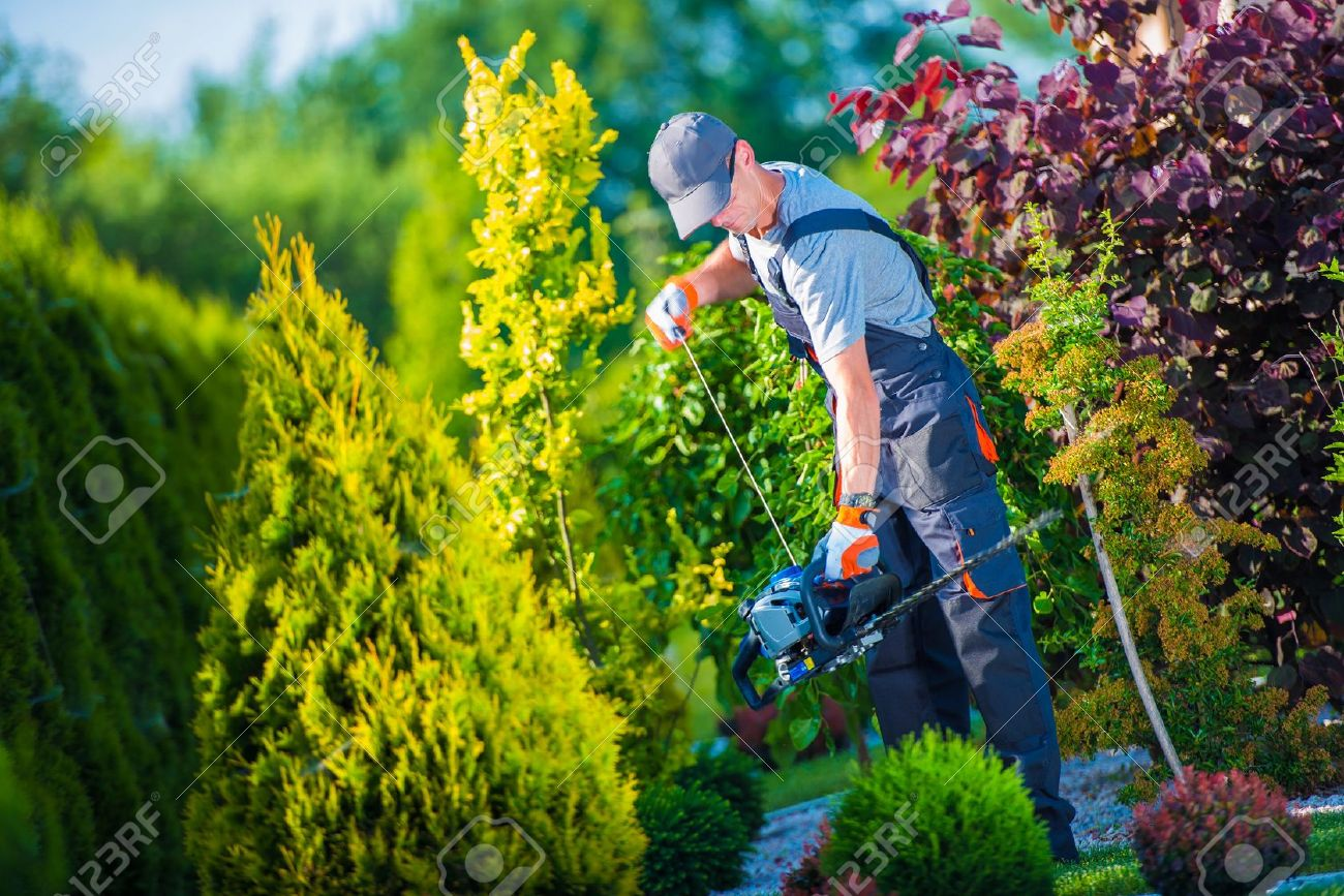 Firing Up Gasoline Hedge Trimmer by Professional Gardener. Garden Works. Trimming Hedge. - 41101355